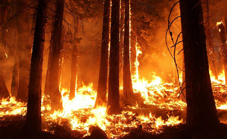 Wildfire. Photo: Pixabay