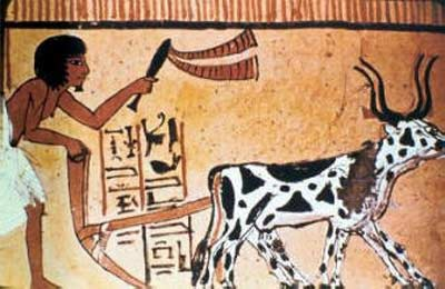 An Ancient Egyptian plough