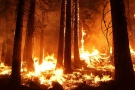 Amazon fire: our lungs are on fire